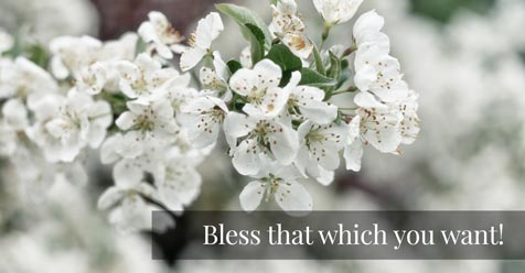Bless that which you want!